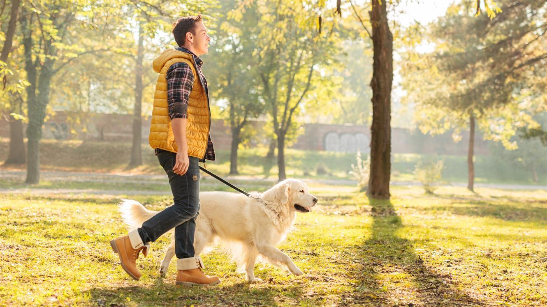 11 ključnih vprašanj za bodočega lastnika psa