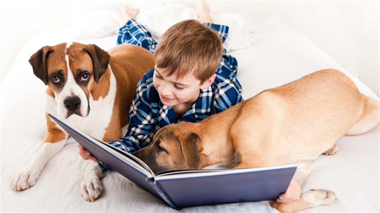 5 načinov za zaposlitev psa v stanovanju