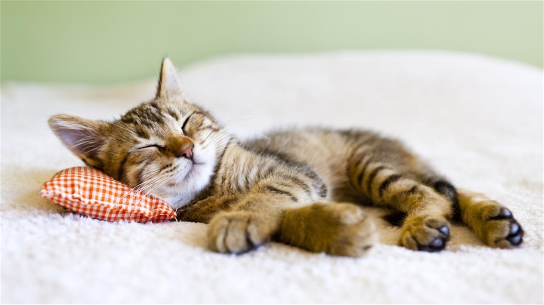 Kako se pripraviti na prihod mačjega mladička?