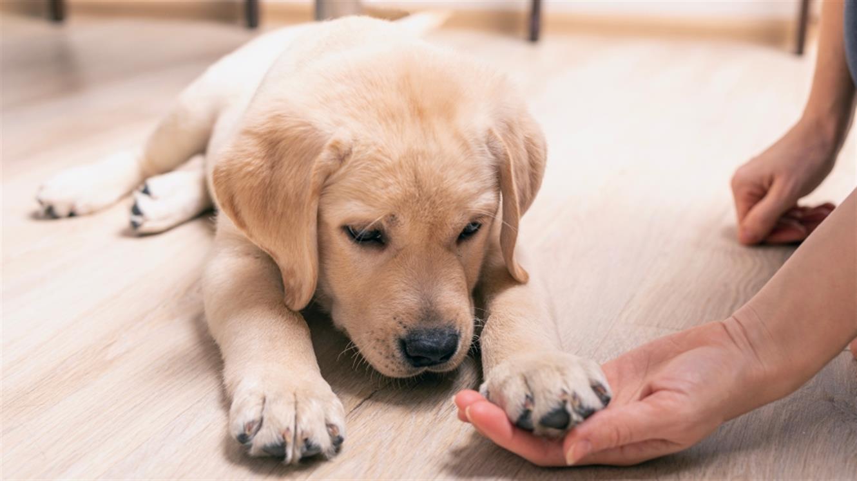 Kako se pripraviti na prihod pasjega mladička?