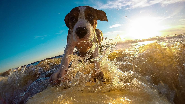 Nasveti za pasje počitnice