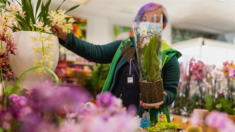 Podarite rože, čudovito pozornost za spomladanske praznike