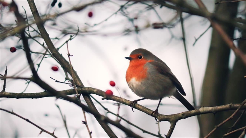 Ptice v vrtu pozimi
