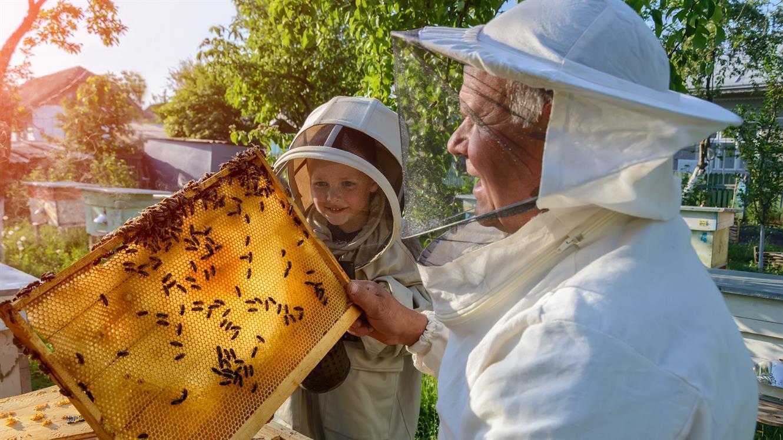 Urbano čebelarstvo v Ljubljani