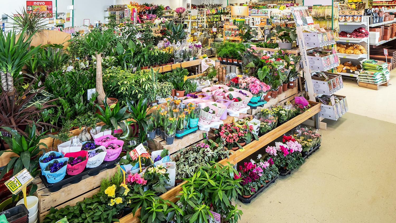 Kalia, vrtni center